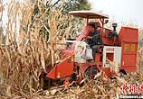 三部门将三大粮食作物制种纳入农业保险保费补贴目录