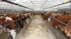 国内最成熟养牛场牛粪处理方案