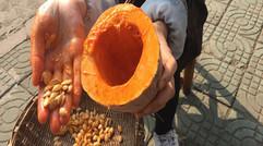 农家种植南瓜籽