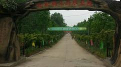 种植基地-红杜鹃生态农业园
