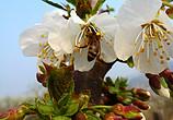 中国•宁陵第十六届梨花节在宁陵县万亩生态梨园景区隆重开幕