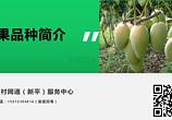 芒果品种介绍